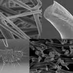 Lucie_Viry-Functional_fibres