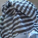 zebra_phil